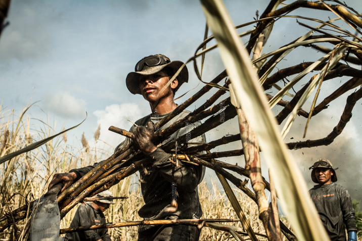 Labor and Life Conditions of Sugarcane Harvest Workers - 716x477